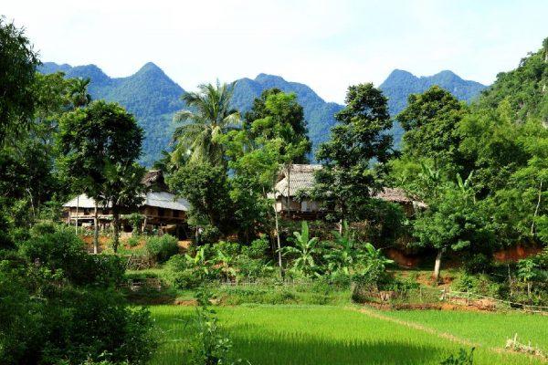 тонкин вьетнам