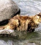 Кот стоит в реке