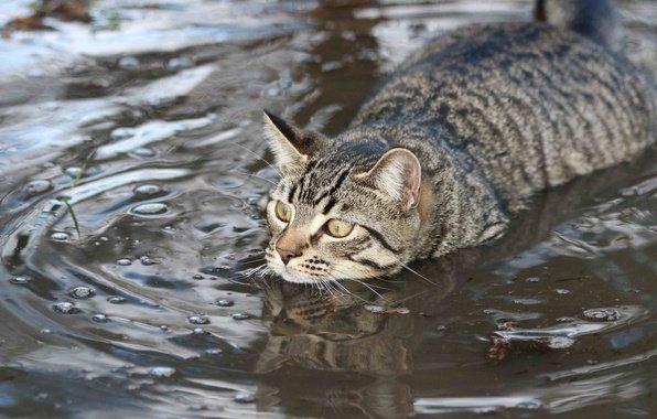 Кот плывёт