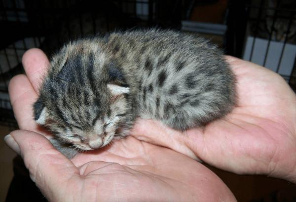 Котёнок на ладонях