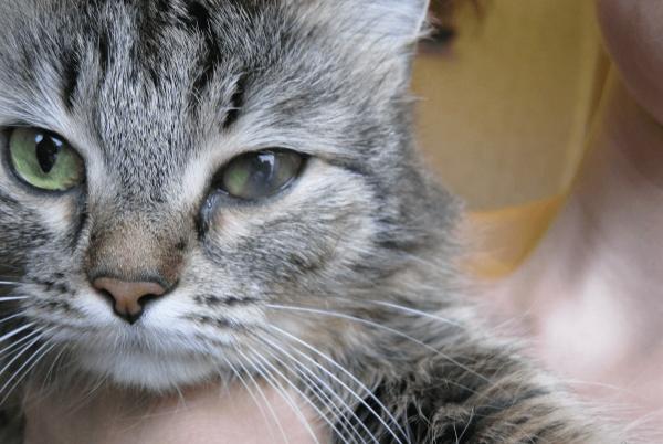 Помутнел глаз у кошки