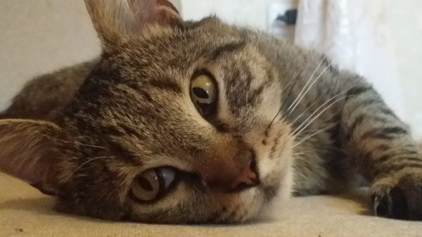 коту плохо