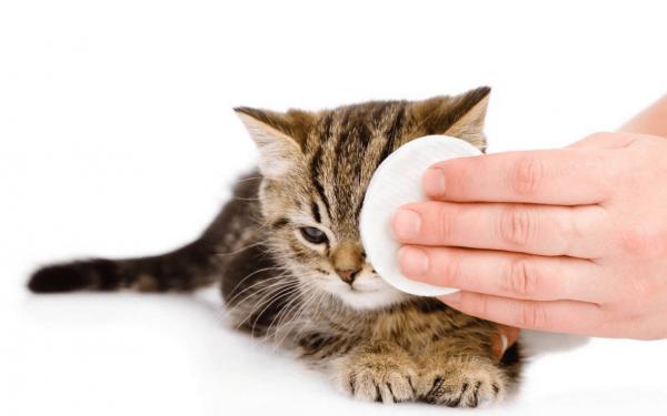 Кошке протирают глаза ватным диском