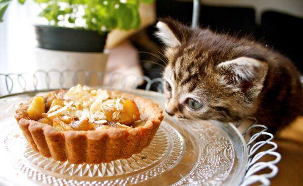 Котёнок за столом