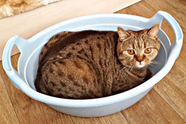 Кот в тазу