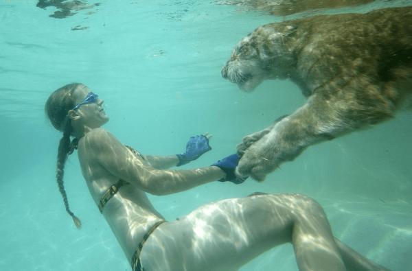Тигр и девушка плывут
