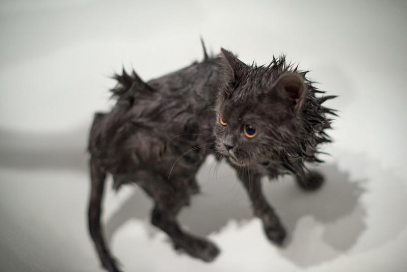 Почему коты воду не любят