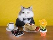 Кот в костюме трапезничает