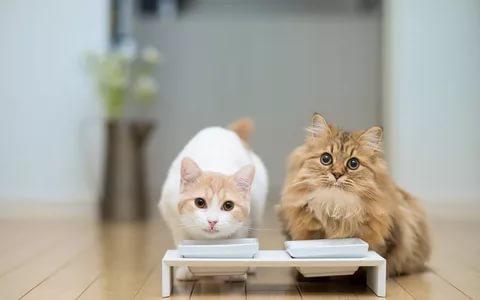 Две кошки едят из сдвоенных мисок