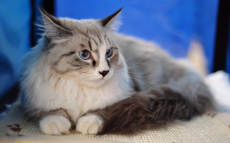 Почему текут слюни у кота