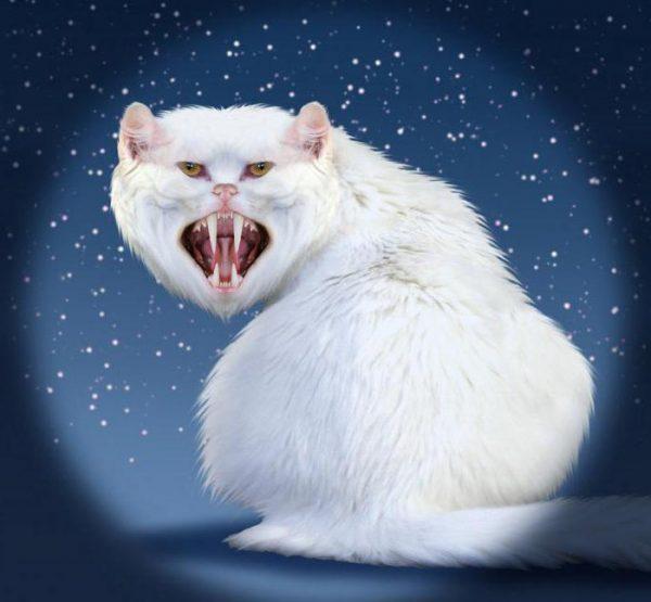 Кошка показывает зубы