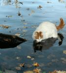 Кот в озере