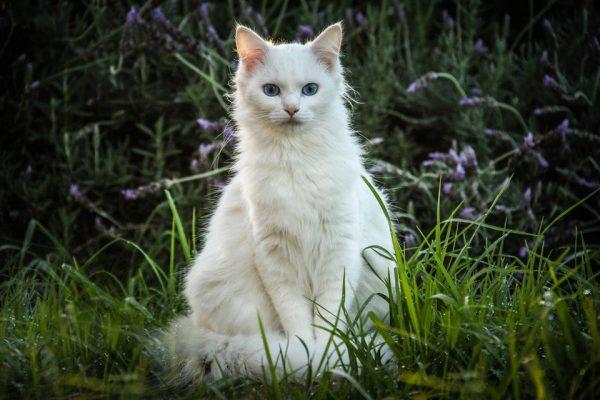 Белая кошка сидит