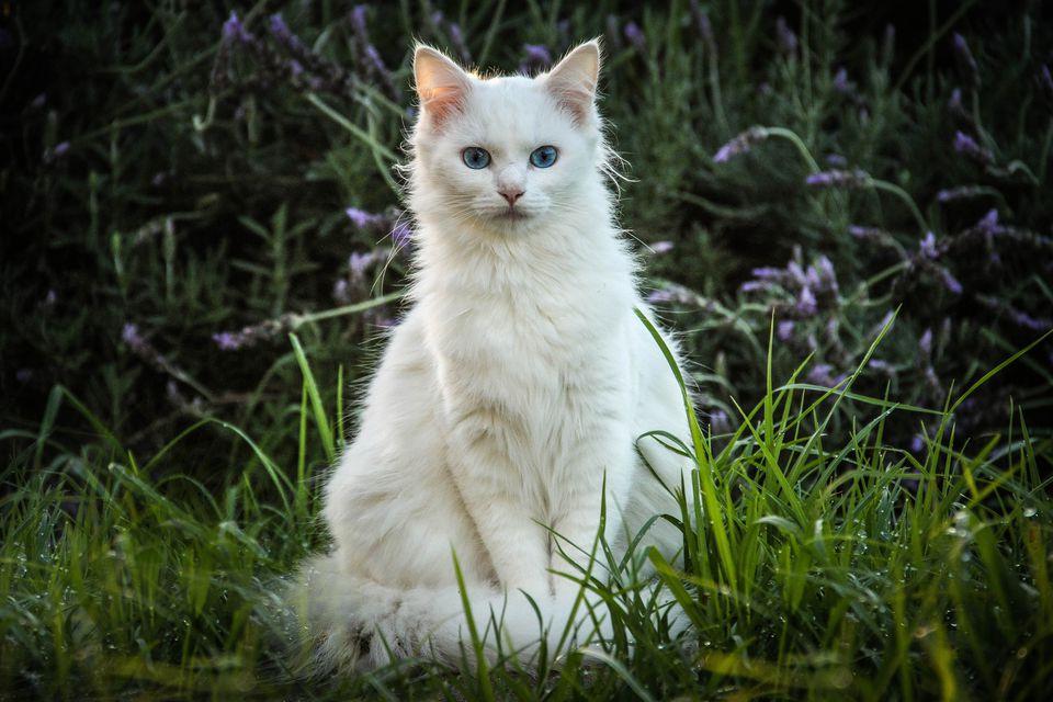 Белая кошечка картинки