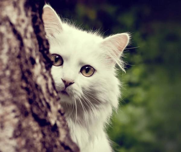 Кошка прячется за деревом