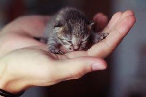 Котёнок на ладони у человека