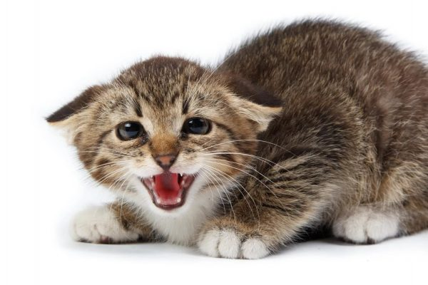 Кот сердится