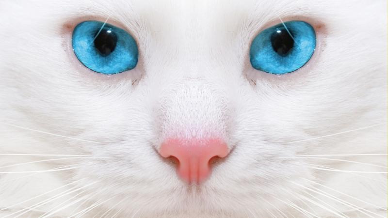К чему снится белая кошка или кот по соннику: описание различных снов, современные и альтернативные толкования сновидений