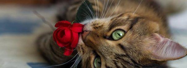 Кот играет с розой