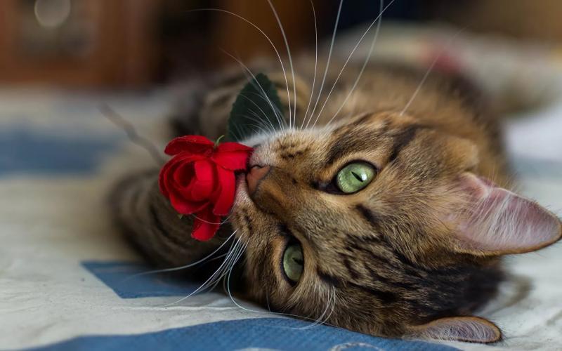 Гангренозный стоматит у кошек: причины, симптомы, лечение