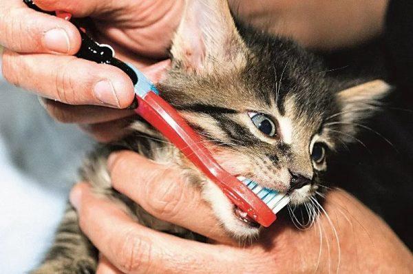 Котёнку чистят зубы