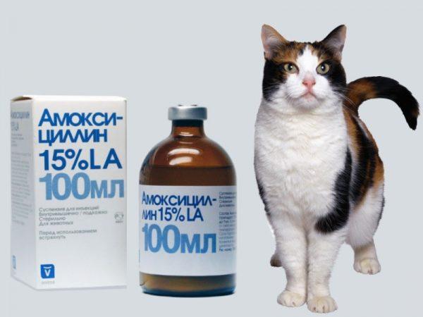 Амоксициллин и кошка