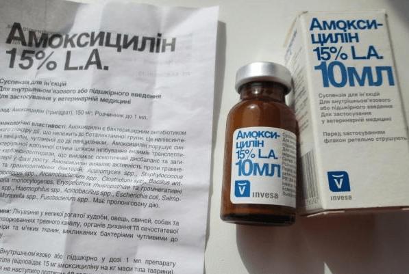 Инструкция Амоксициллина