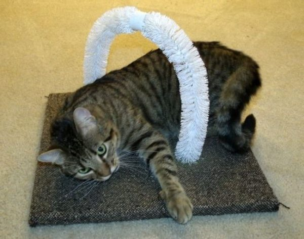 Кошка в чесалке