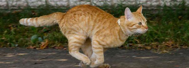 Рыжий кот убегает