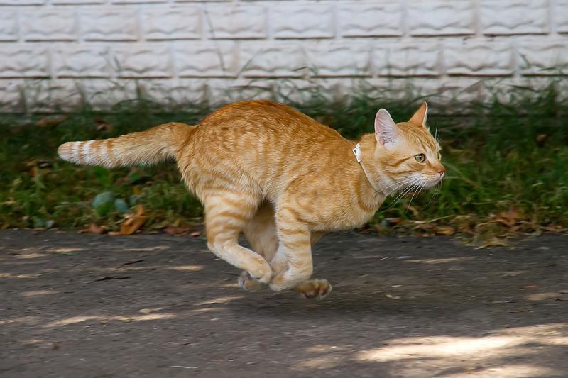 Пропал кот или кошка: что делать, где искать животное, как найти потерявшегося котенка, советы и рекомендации владельцам