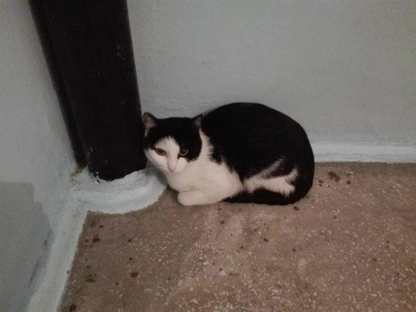 Кот сидит рядом с трубой в подъезде