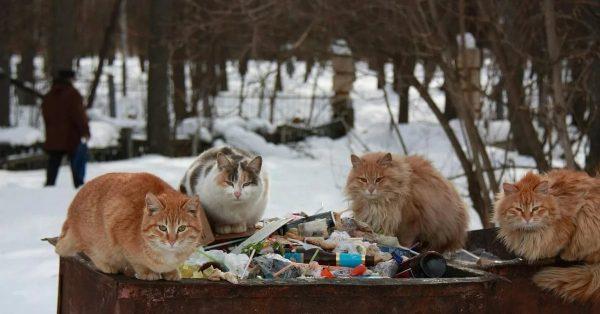 Кошки на помойке