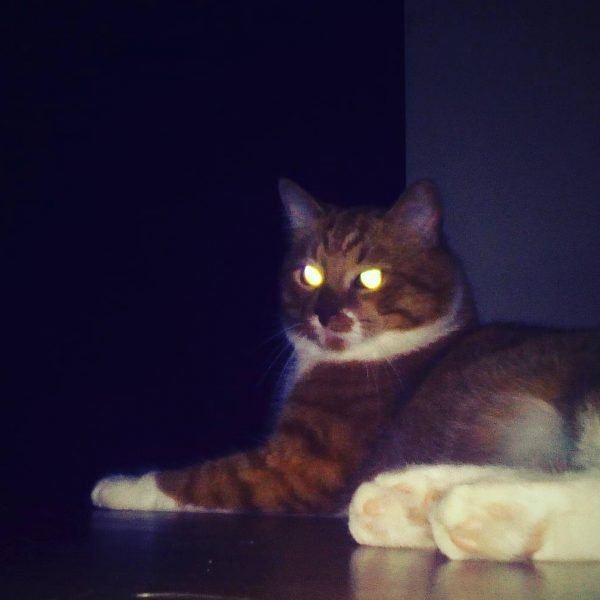 Глаза лежащего в темноте кота