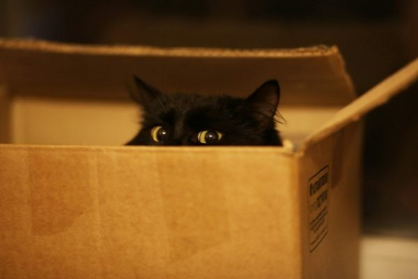 Чёрный кот выглядывает из коробки
