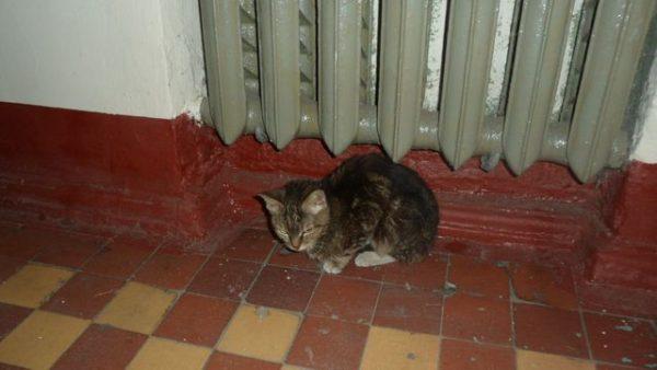 Кот под батареей в подъезде