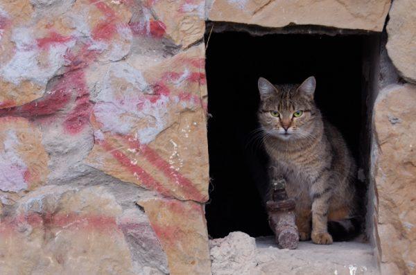 Кот сидит в окошке подвала