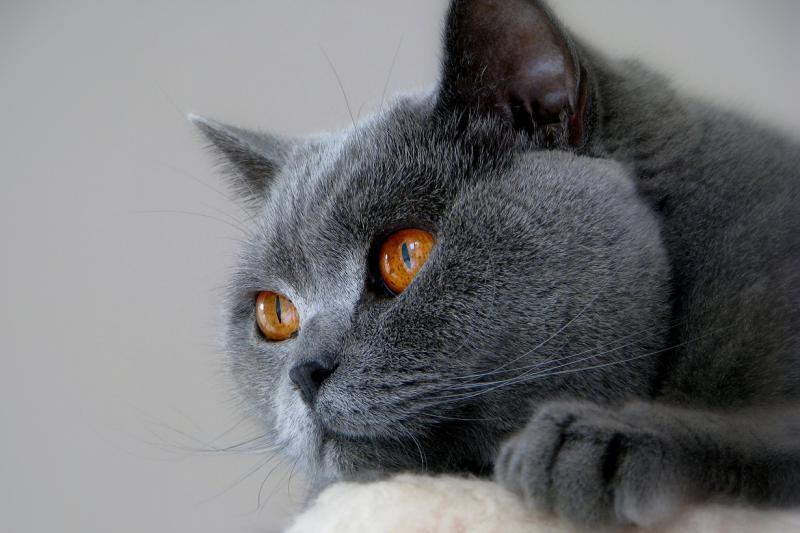 Энтерит у кошек симптомы и лечение вирусной инфекции