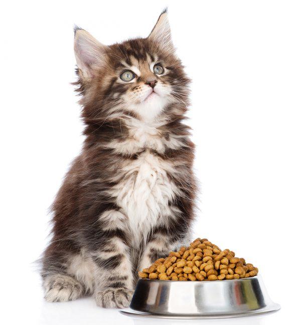 Гранулы кошачьего корма