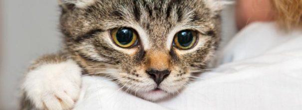 взгляд кота из-за плеча ветеринара