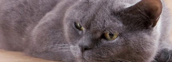 Кошка отказывается от еды и воды