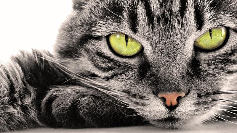 Тилозин для кошек │ Инструкция по Применению Тилозина 50 Коту