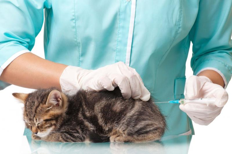 Фоспренил для кошек и котов