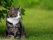 Полосатый кот сидит на траве