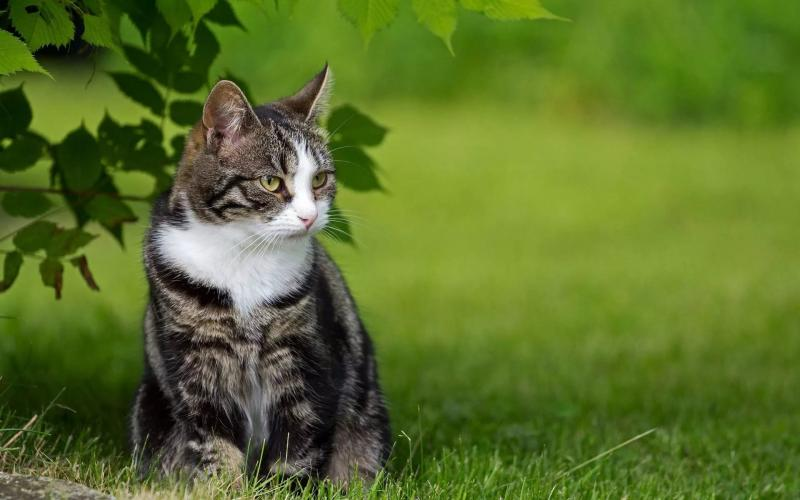 Хроническая почечная недостаточность у котов как спасти животное