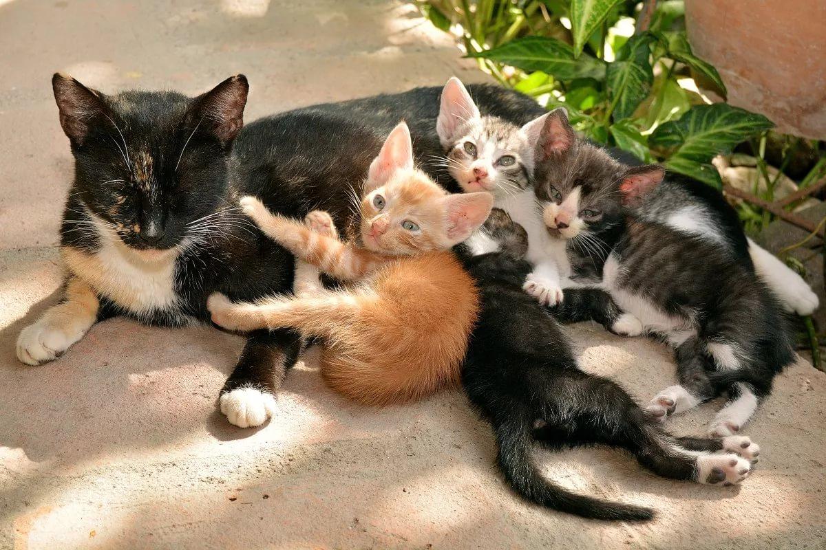 день картинки кошаки и котята москве, где поэт