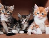 Три котёнка сидят в коробке