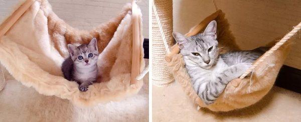 Котёнок лежит в гамаке; взрослый кот лежит в гамаке