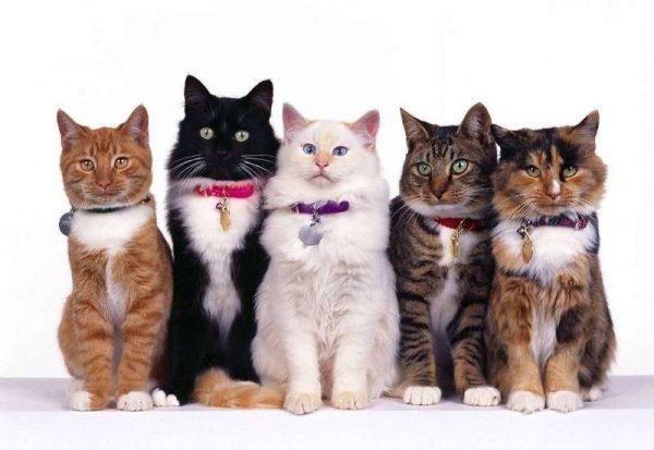 Пять разных котов сидят