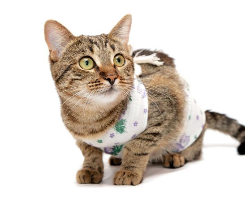 Попона для кошки: особенности выбора, нюансы использования после стерилизации, как сделать своими руками и правильно завязать