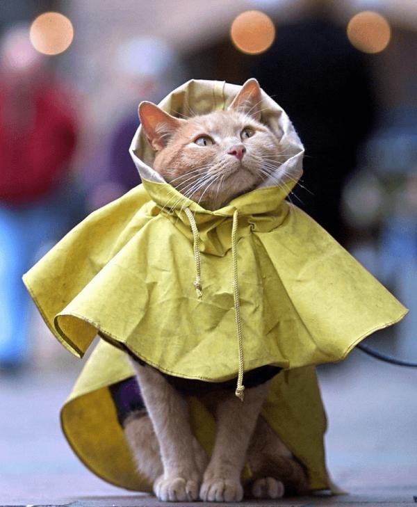 Кот в дождевике